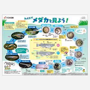 「小学校理科ポスター」デザイン